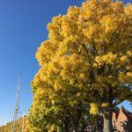 秋晴れの週末「エンクハイゼン」へドライブ