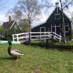 可愛いオランダの風車村「Zaanse Schans(ザーンセ・スカンス)」